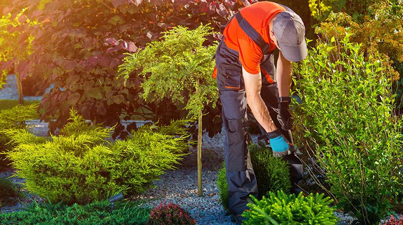 Välj rätt robotgräsklippare på techlinerobot.se